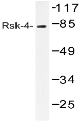AP20537PU-N - RPS6KA6 / RSK4