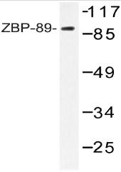 AP20538PU-N - ZNF148