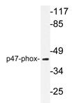AP20365PU-N - NCF1