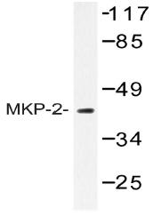 AP20437PU-N - DUSP4