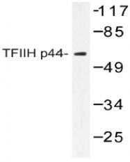 AP20441PU-N - GTF2H2 / BTF2P44