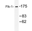 AP20351PU-N - CD309 / VEGFR-2 / Flk-1