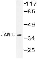 AP20452PU-N - COPS5