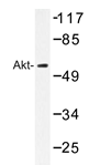 AP20342PU-N - AKT1 / PKB