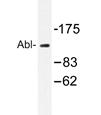 AP20341PU-N - ABL1