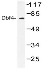 AP20463PU-N - DBF4 / ASK