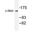 AP20332PU-N - HGF receptor