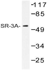 AP20471PU-N - Serotonin receptor 3A (HTR3A)
