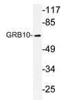 AP20303PU-N - GRB10 / GRBIR