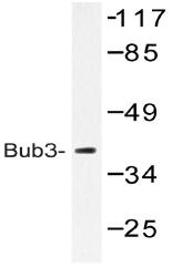AP20475PU-N - BUB3