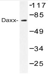 AP20484PU-N - DAXX