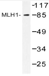 AP20490PU-N - MLH1