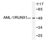 AP20291PU-N - RUNX1