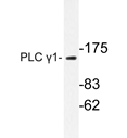 AP20282PU-N - PLCG1