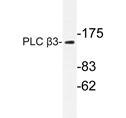 AP20281PU-N - PLCB3
