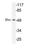 AP20277PU-N - SHC1 / SHC