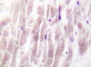 AP20265PU-N - Phospholipase D1 / PLD1