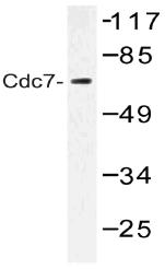 AP20508PU-N - CDC7