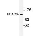 AP20236PU-N - HDAC6
