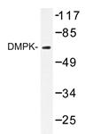AP20433PU-N - DMPK