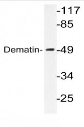 AP20222PU-N - Dematin