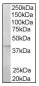 AP16105PU-N - RNF2