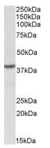 AP22434PU-N - PCBP1