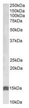 AP22391PU-N - Insulin-like growth factor I / IGF1