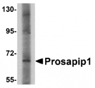 AP30693PU-N - PROSAPIP1