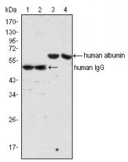 AM20434SU-N - Albumin