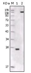 AM20530SU-N - FER / TYK3