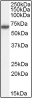 AP22490PU-N - XRCC9 / FANCG