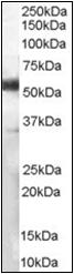 AP22502PU-N - CD14