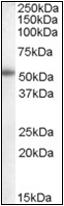 AP22508PU-N - Aromatase