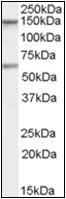 AP22517PU-N - CARD11 / CARMA1