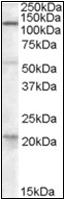 AP22525PU-N - DAGLA