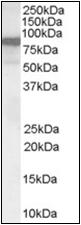 AP22535PU-N - VAV3