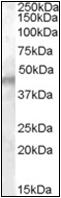 AP22546PU-N - KCNJ11