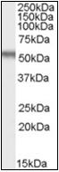AP22550PU-N - EGR2