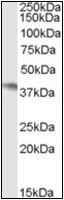 AP22576PU-N - NCF-4