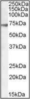 AP22583PU-N - GABRA4