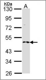 AP23178PU-N - RNF25