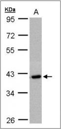 AP23164PU-N - C2orf24
