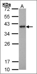 AP23158PU-N - SPI1 / PU.1