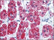 AP23157PU-N - CAD Protein