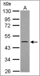 AP23147PU-N - OCT3/4