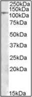 AP23100PU-N - MTHFD1