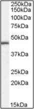 AP23050PU-N - ILF2