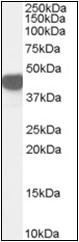 AP23046PU-N - ASS1