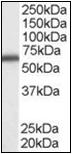 AP23029PU-N - DDX5